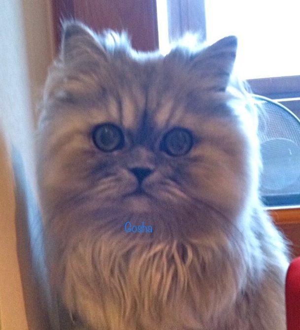 ゴーシャ、「ペットモデル募集」に応募 💪💪💪✨のイメージ